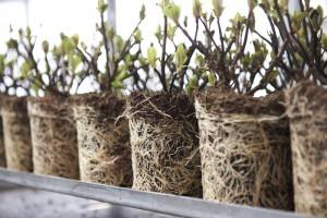 Gestandaardiseerde substraten- en potgrondmengsels