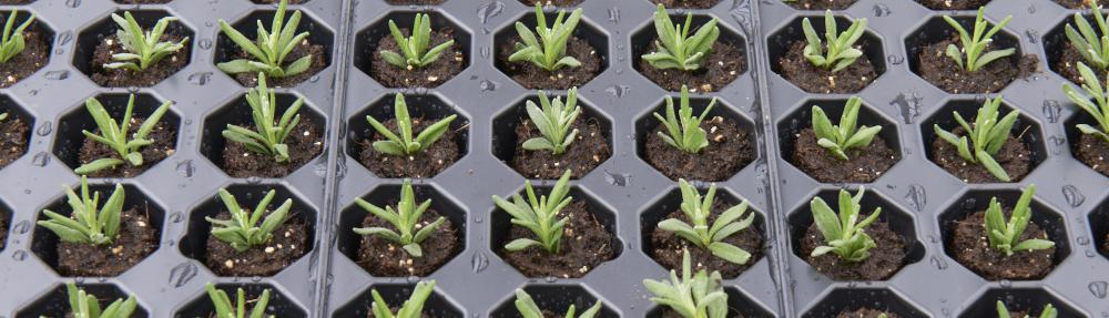 Jongkind-tray-met-jong-planten